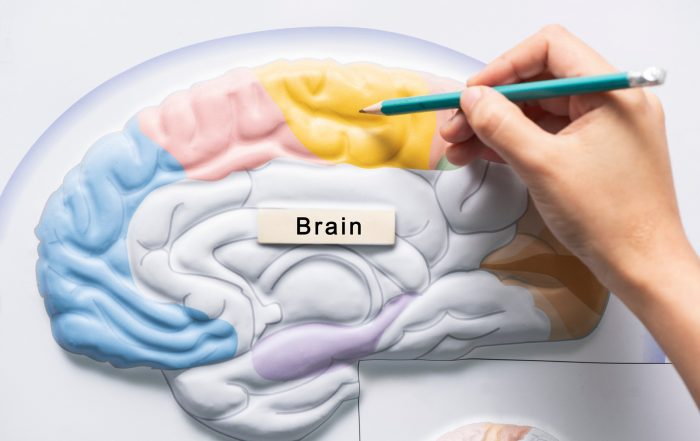 Brain diagram drawing stroke